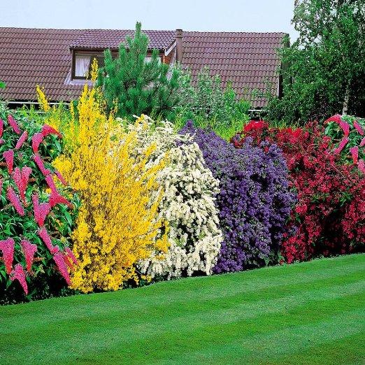 Pflegeleichte Hecke Garten : Liguster immergrünwinterhart Infos dazu