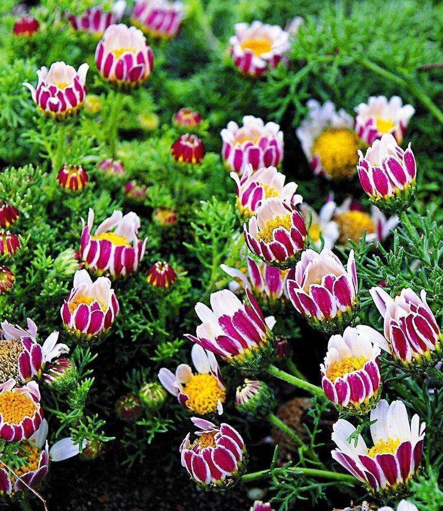 ☛ blühende bodendeckende Pflanzen ✓ für einen freien Platz im Garten