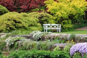 Heckenpflanzen - bodendeckende Pflanzen