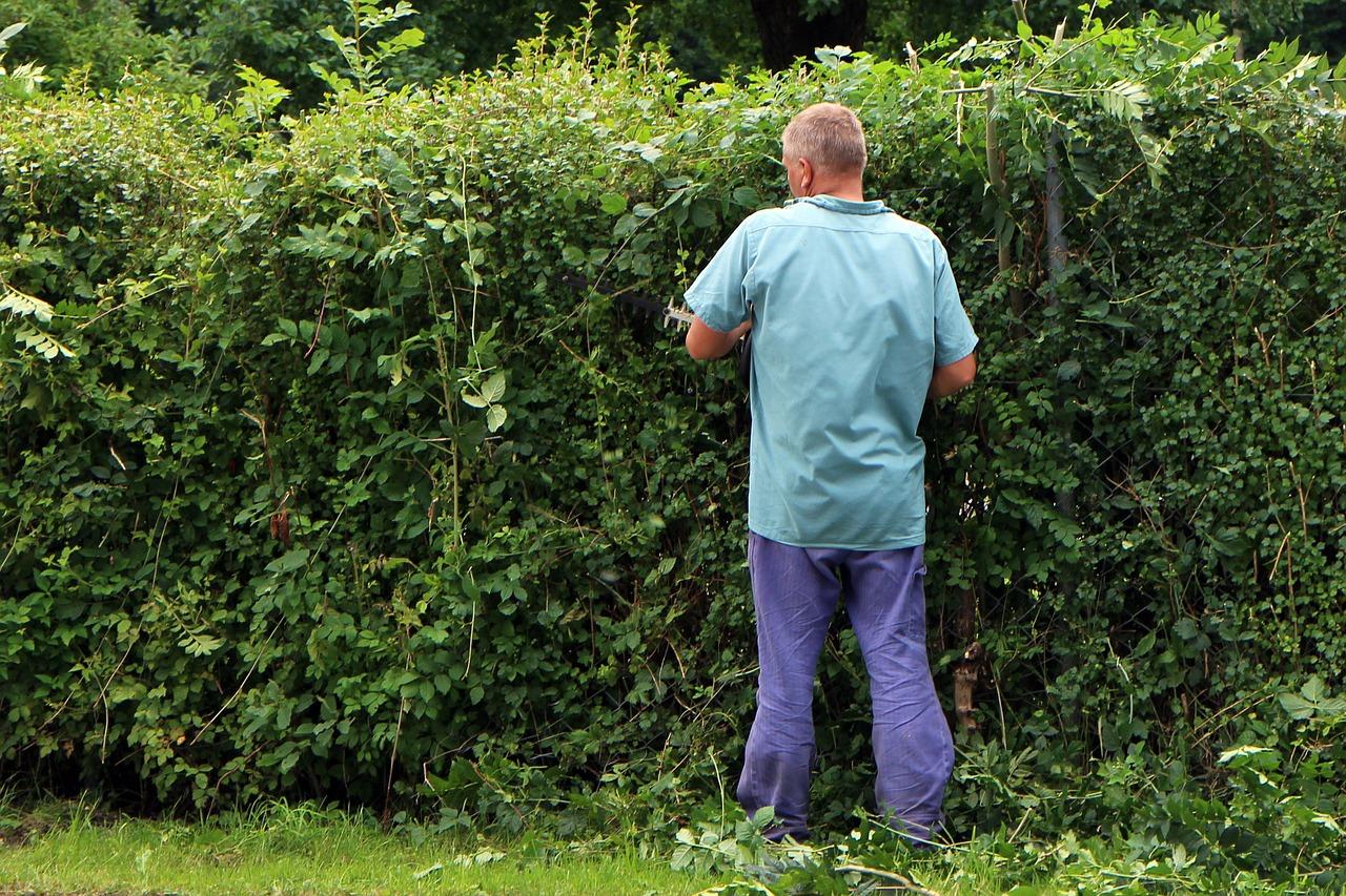 ☛ Hecken pflanzen und pflegen ✓ Sichtschutz ✓ dichtes Blattwerk